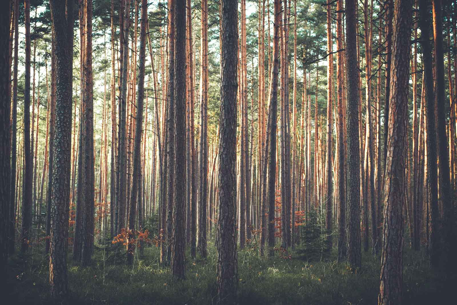 The Wood and the Trees